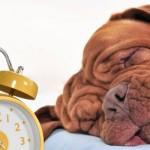 Weekendopinie: Ligt Grafisch Nederland te slapen?